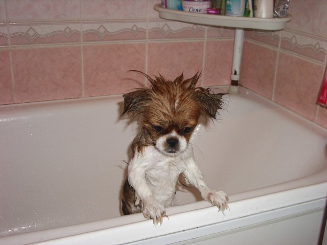 Собаки в ванной