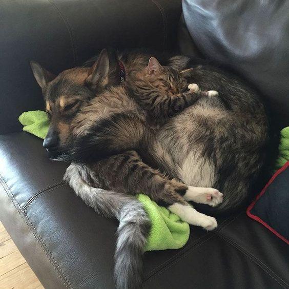 Собаки и коты