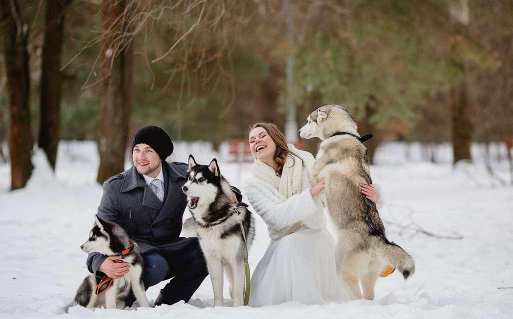 Собаки на свадьбе