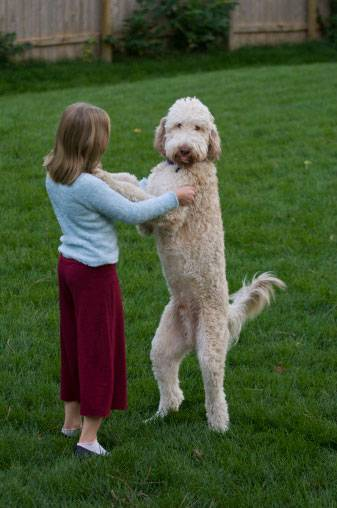 Собаки-обнимаки