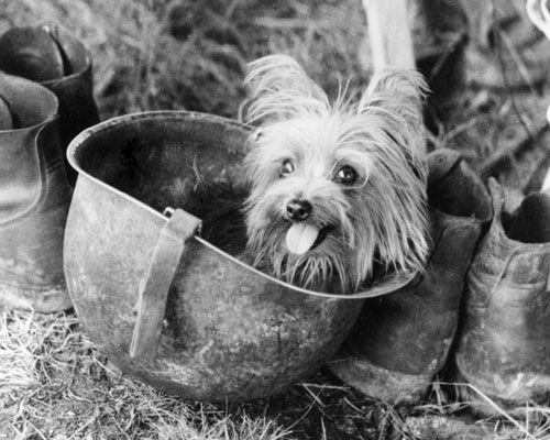 Ретро фото с собаками