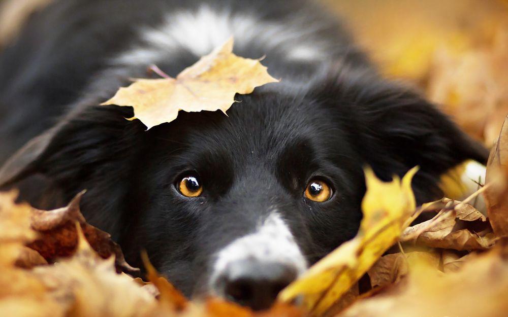 Собаки в листьях