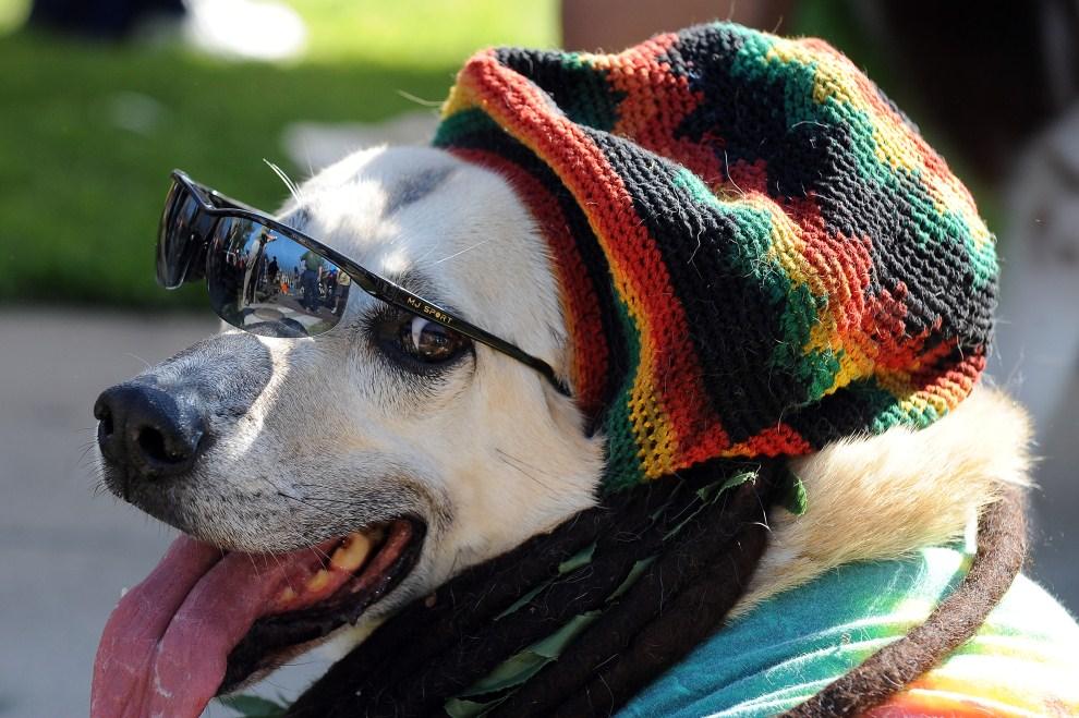 Собаки в шапках