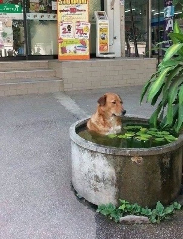 Странные собаки