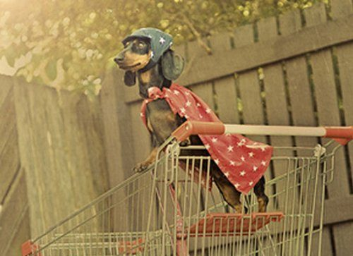 Собаки-супергерои