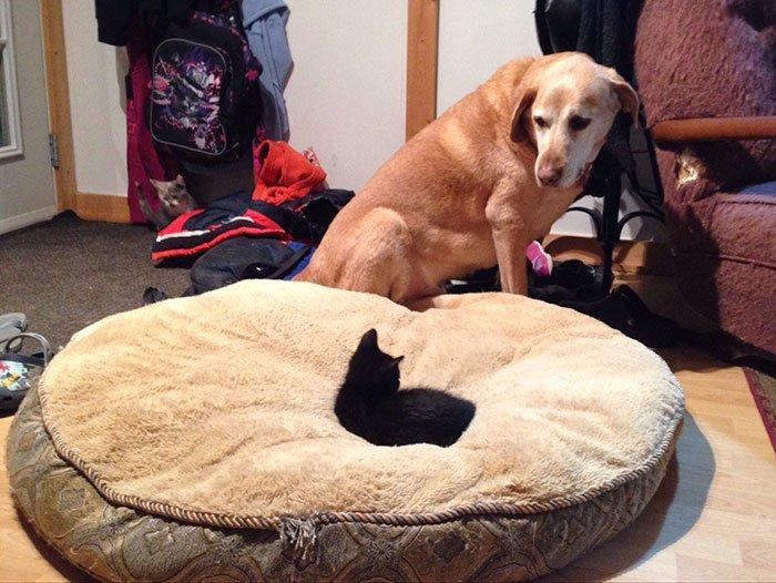 Кошка на собачьем лежаке
