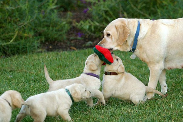 Мамы и щенки