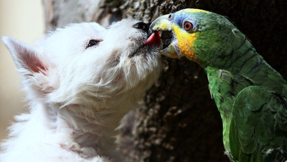 Дружба собак и попугаев