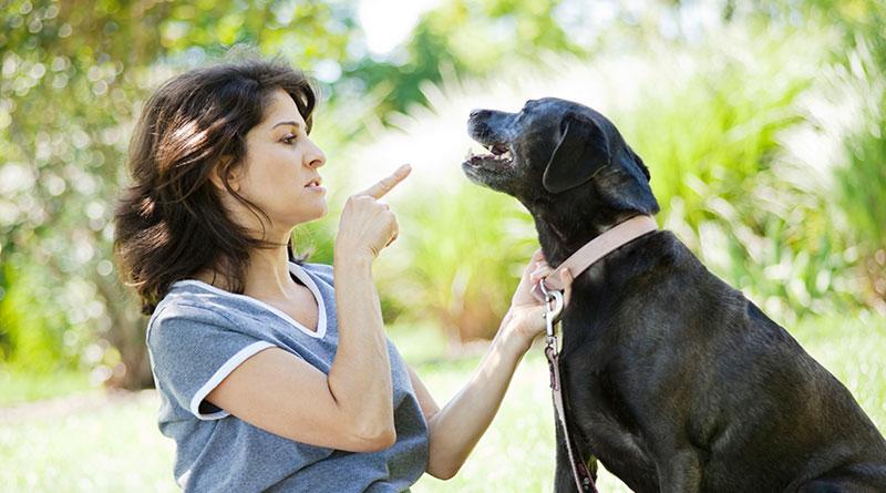Как научить собаку команде Фу: особенности и нюансы
