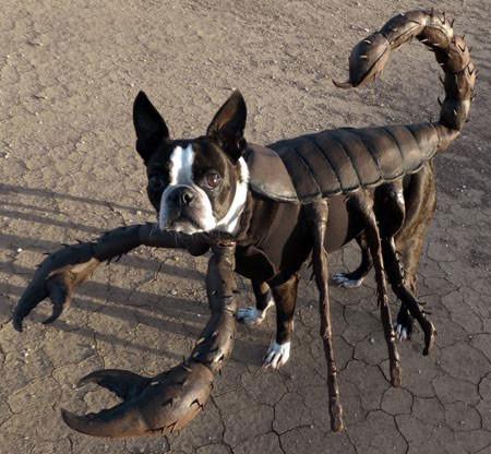 Собачий костюм для Хэллоуина