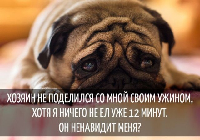 Мысли собак