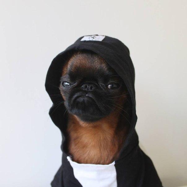 Пёс не любит фоткаться