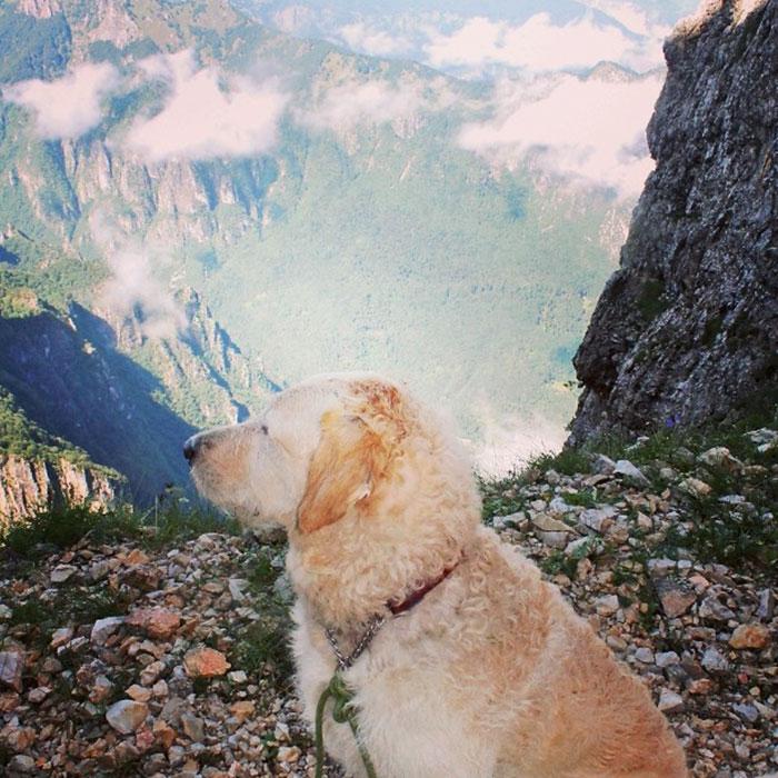 Собака-путешественница