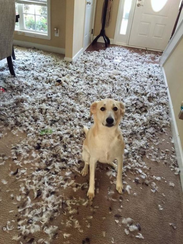 Собачьи шкоды