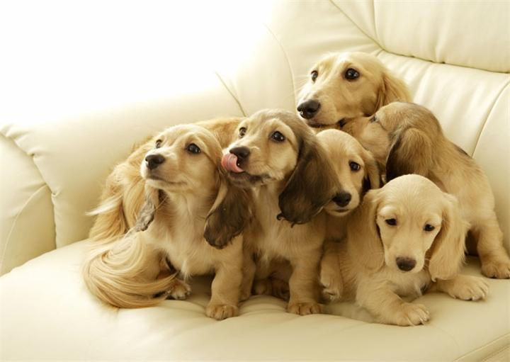 Собачье семейство