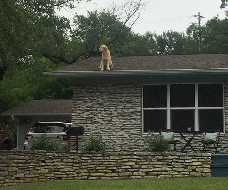 Собака на крыше