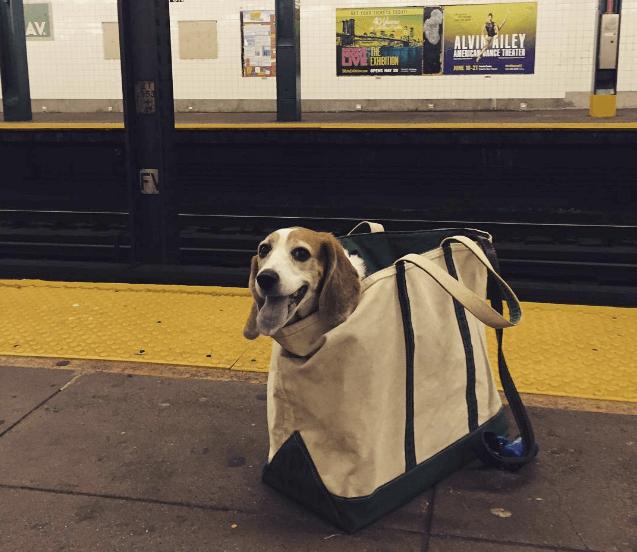 Собаки в метро