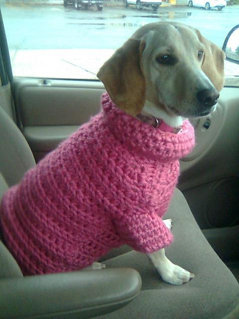 Собаки в свитере