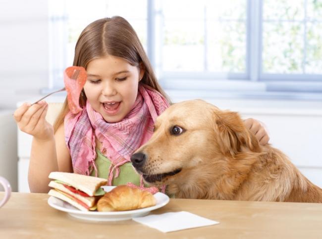 Как отучить собаку воровать еду со стола?