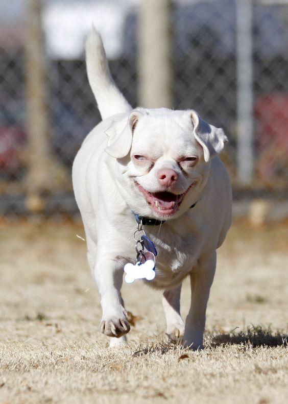 Собаки-альбиносы
