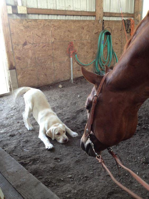 Собаки и Лошади