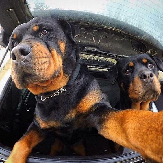 Селфи собак