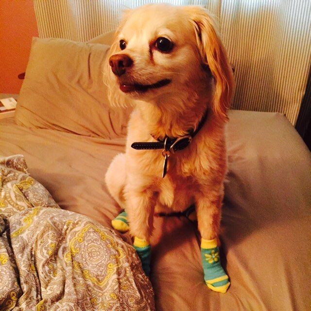 Собаки в носочках