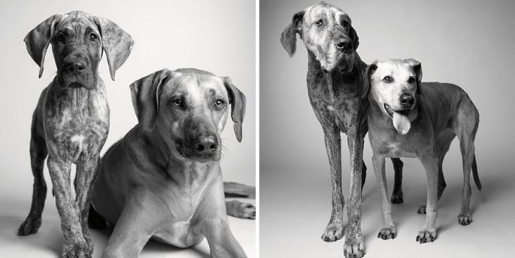 Собачья жизнь в двух фото