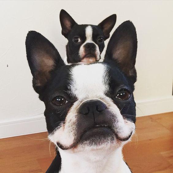 Собачьи эмоции