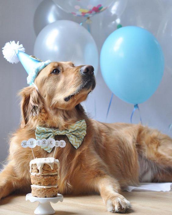 День рождения собаки