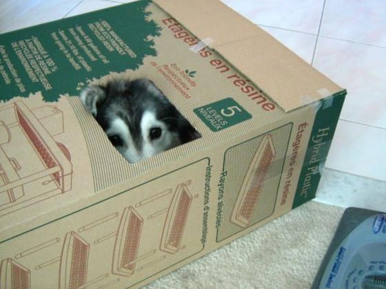 Собака-кот