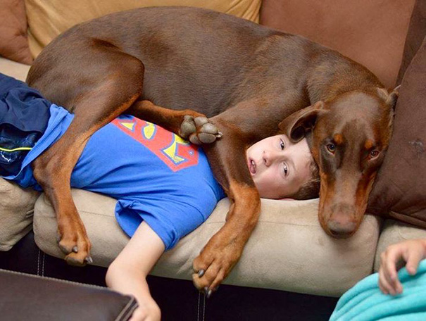 Собачья наглость