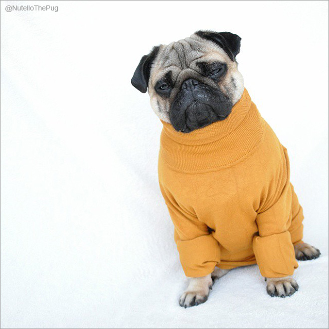 Нутелло- самая модная собака