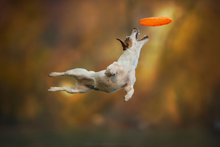 Собаки в прыжке