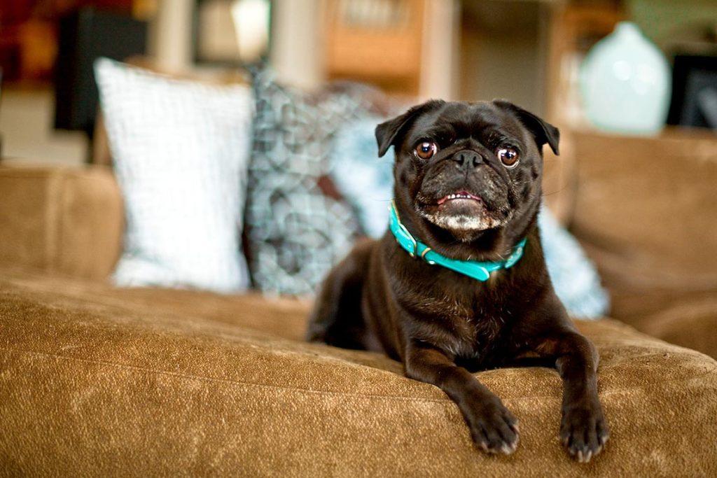 Портреты собак. Грэйс Чон