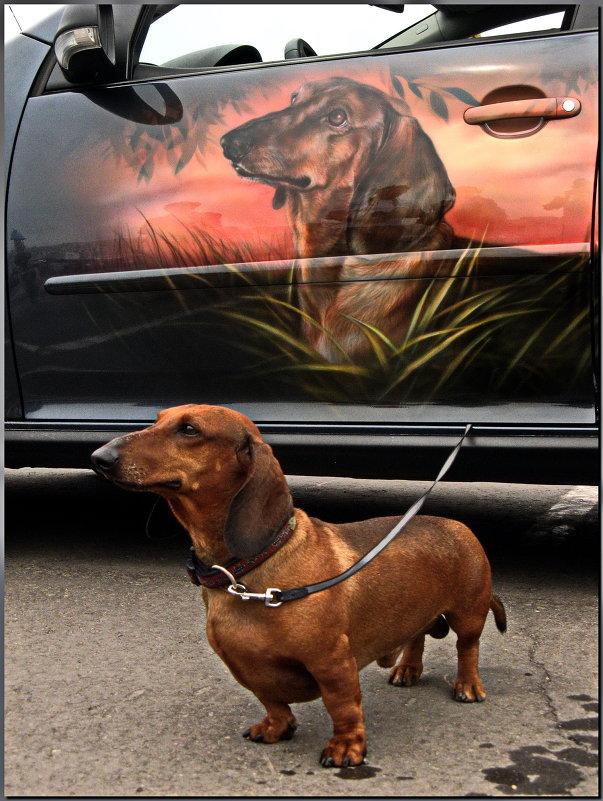 Аэрография: собаки