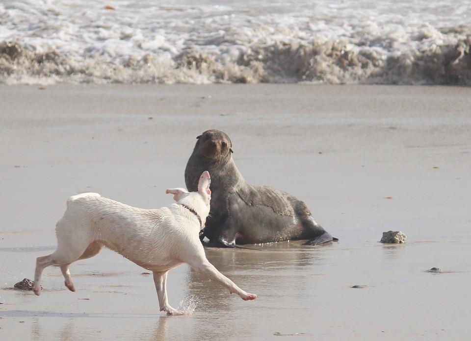 Собаки и морские друзья