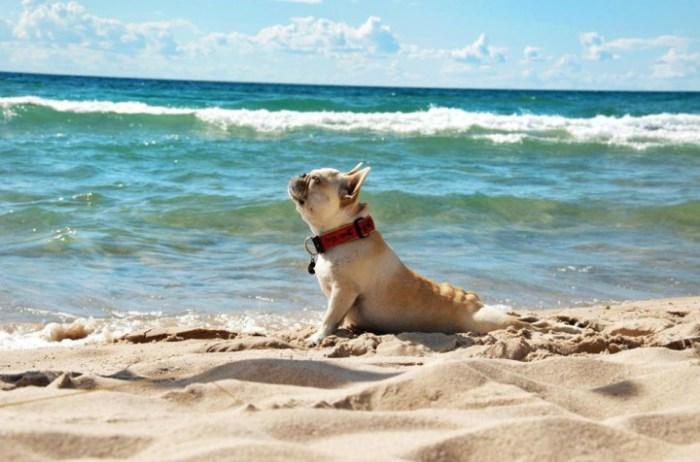 Собаки на море