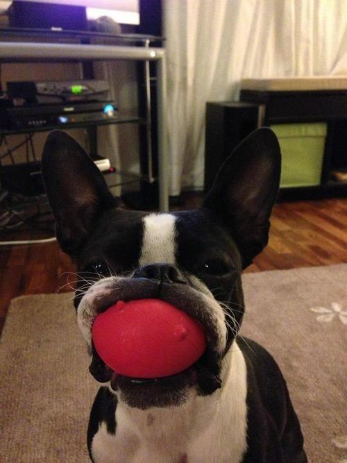 Собаки и мячики