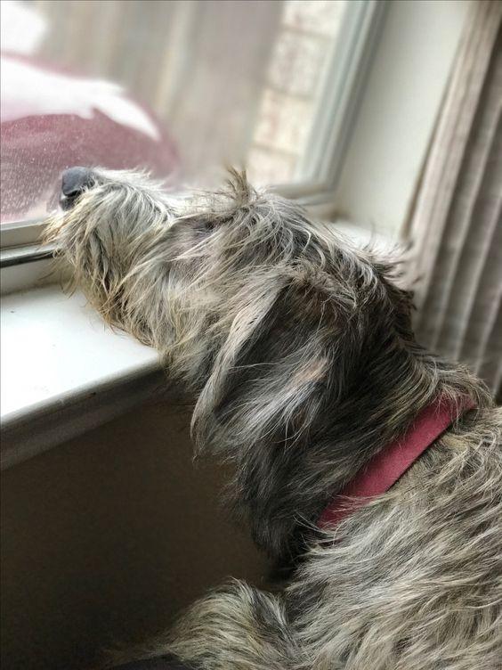 Собаки ждут хозяев