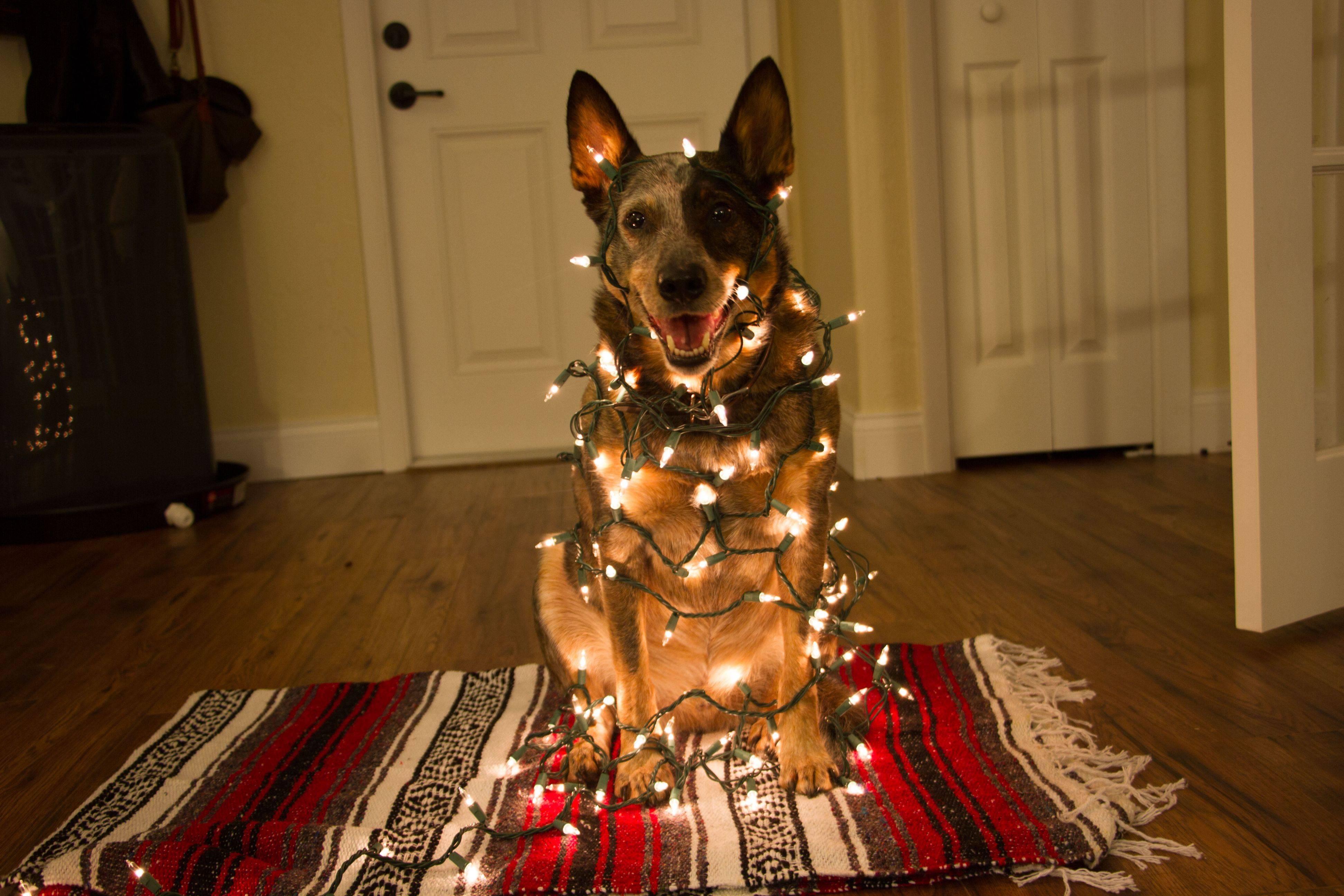Как нарядить собаку на новый год своими руками