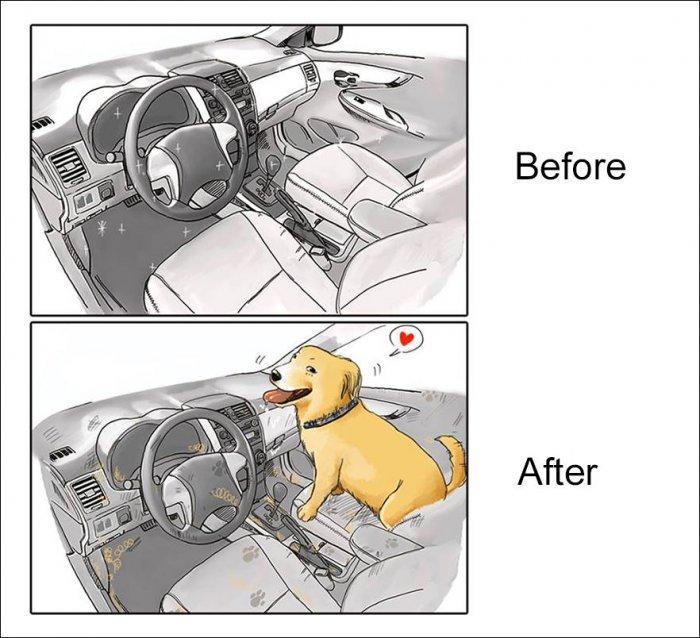 Жизнь с собакой: до и после