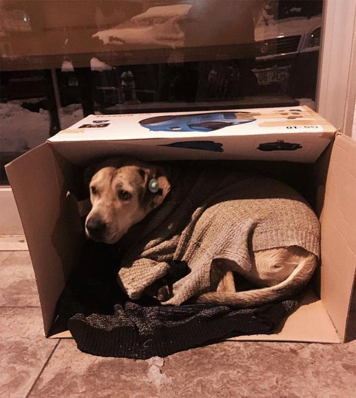 Бездомные животные: зима в Стамбуле