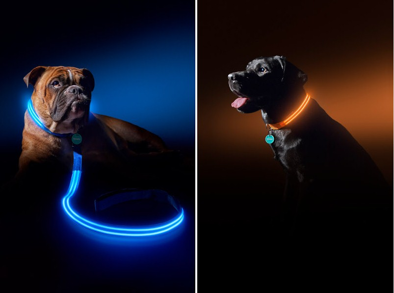 Необычные поводки для собак