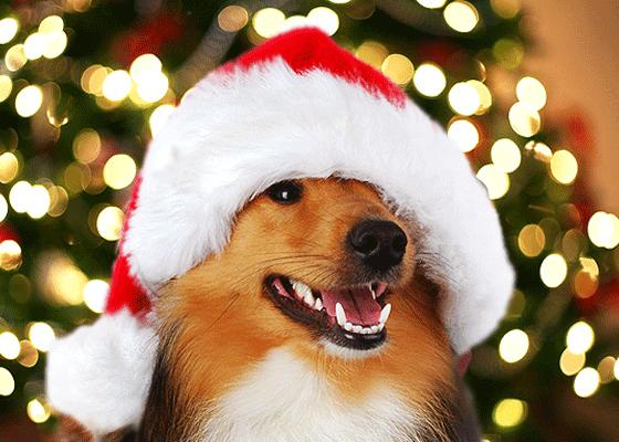 Собаки в новогодних костюмах