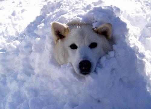 Переохлаждение и обморожение у собак