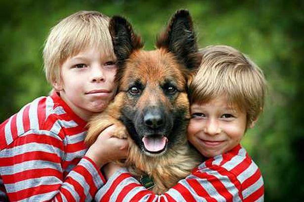 Дети и овчарки