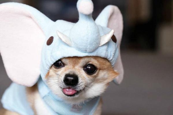 Костюм новогодний для собаки