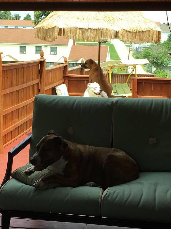Рай для собак