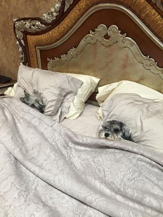 Собаки сладко спят